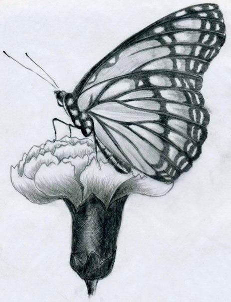 Рисуем бабочку карандашом 0