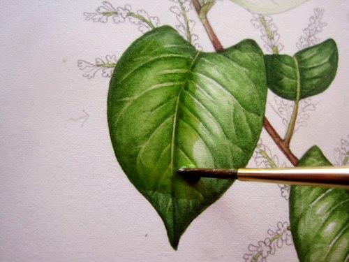 Рисуем листья 0