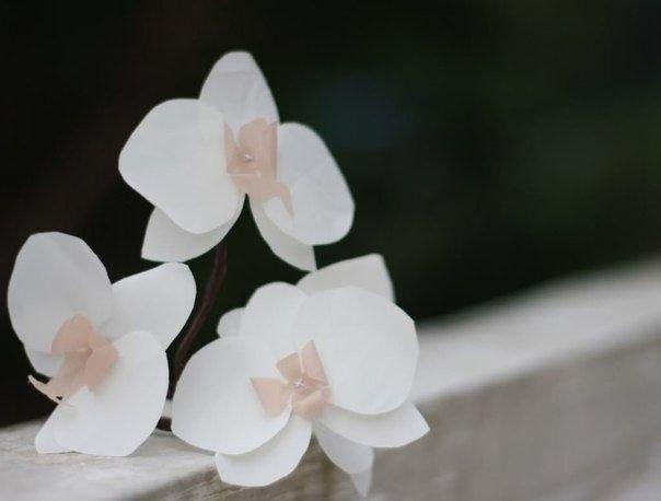 Самодельные орхидеи