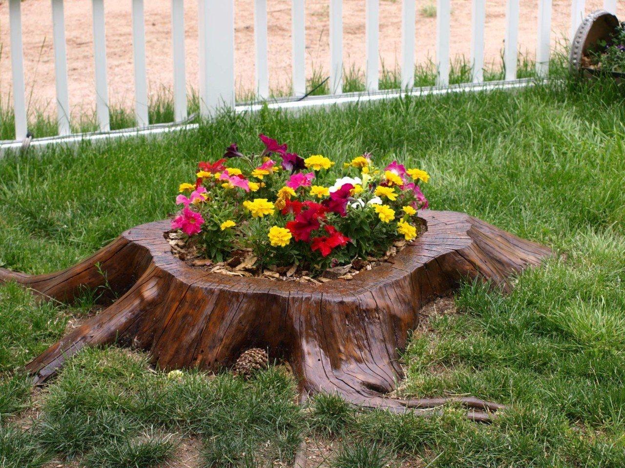 Пни и цветы фото