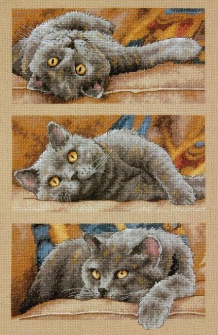 Три положения кошки