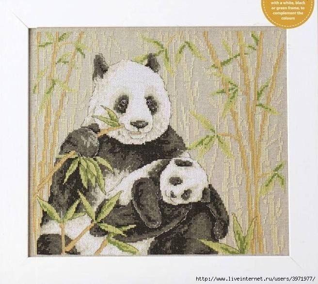 Панды в обнимку